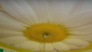 Виды тканевых натяжных потолков фото