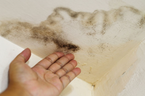 Обилие влажности приводит к появлению грибка
